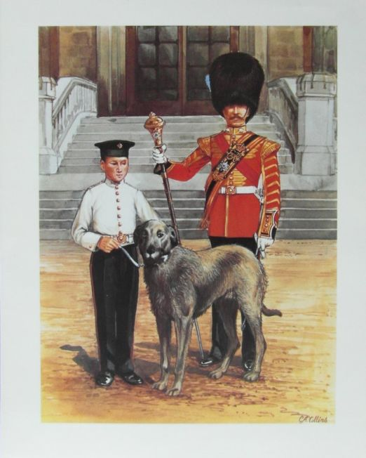 C.A Collins Irish Guards Mascot