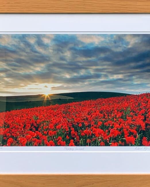 Derek Payne Poppy Sunset (Image 39 x 29cm) (Frame 57 x 47cm)